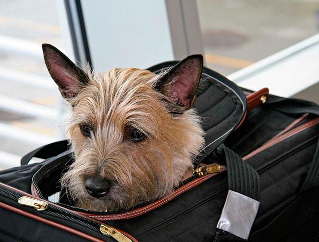 Правила перевозки животных в самолете по России