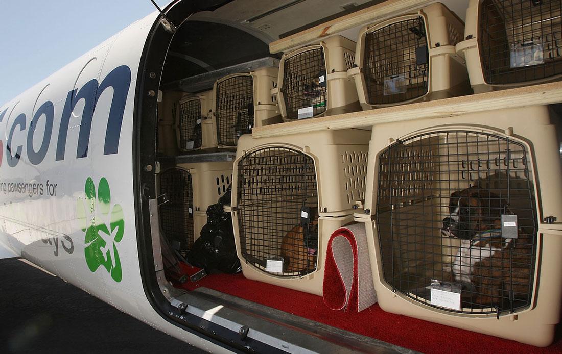 Перевозка собак в самолете
